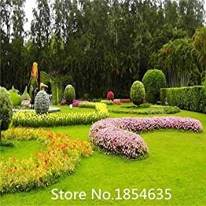 High quality Lawn seed, no pruning, green grass seed, 500pcs
