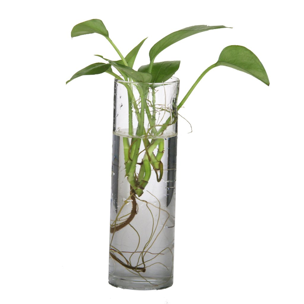 Amazon cylinder glass wall hanging vase bottle for plant amazon cylinder glass wall hanging vase bottle for plant flower decorations home kitchen reviewsmspy