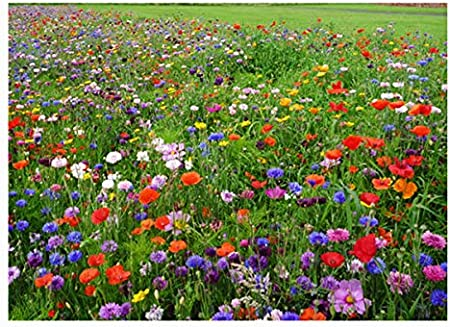 Amazon Com Western Wildflower Seed Mix Annuals And Perennials