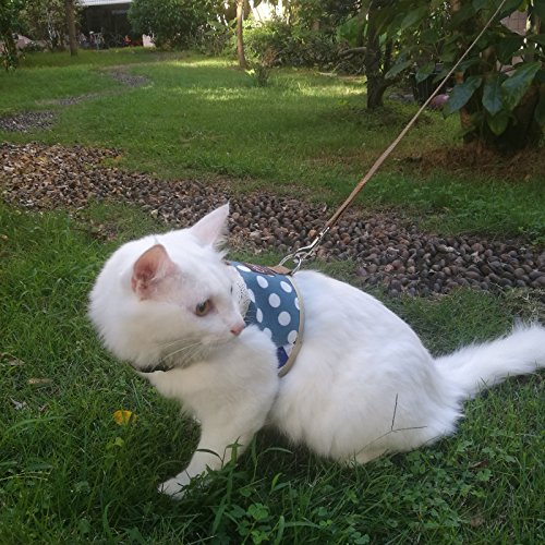 with Cat Leashes design