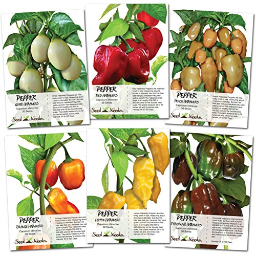 Seed Needs, Habanero Seed Collection (6 Individual Packets) Non-GMO by Seed Needs