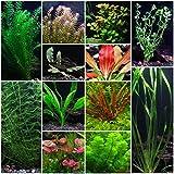 12 Species Live Aquarium Plants Package - Anacharis, Swords, Vallisneria, Anubias and more!