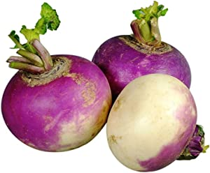 David's Garden Seeds Turnip Purple Top White Globe 7705 (Multi) 500 Non-GMO, Heirloom Seeds