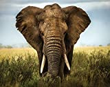 Jplo9|#Jp London MDXL1X358320 Jpl and Alberto Ghizzi Panizzapresent Encounters In Serengeti Elephant Africa Photo 12 Ft Wide by 8.5 Ft High Peel and Stick Fully Removable Wall Mural Extra Large