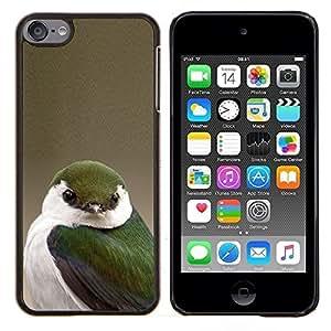 Dragon Case - FOR Apple iPod Touch 6 6th Generation - green songbird beige white green nature - Caja protectora de pl??stico duro de la cubierta Dise?¡Ào Slim Fit