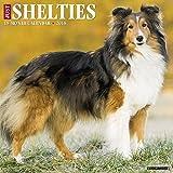 Just Shelties 2018 Wall Calendar (Dog Breed Calendar)