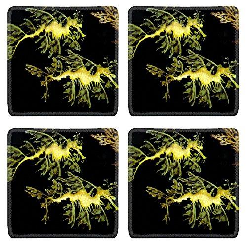 (MSD Natural Rubber Square Coasters IMAGE ID: 9146139 Leafy Sea Dragons)