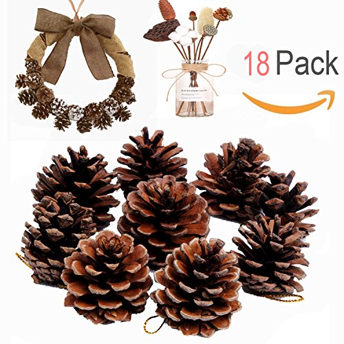 Natural Pine Cones, Lodge Pole Decorative Fall Winter Holiday Home Decor Vase Filler, 18 PCS