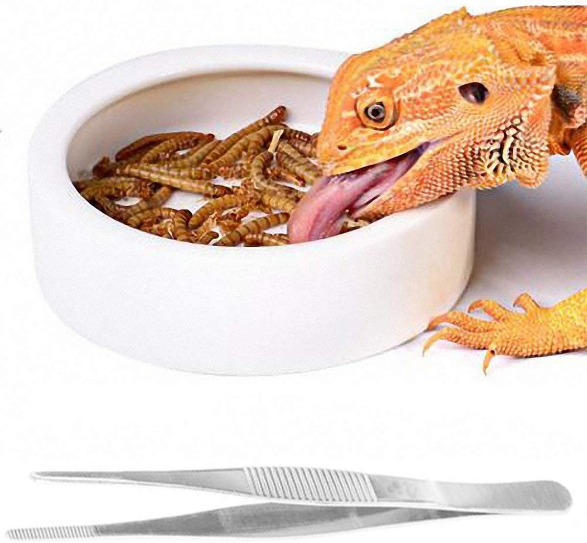 Reptile Dish with Feeding Tweezers Tongs, Ceramic Reptile Feeding Bowl-M
