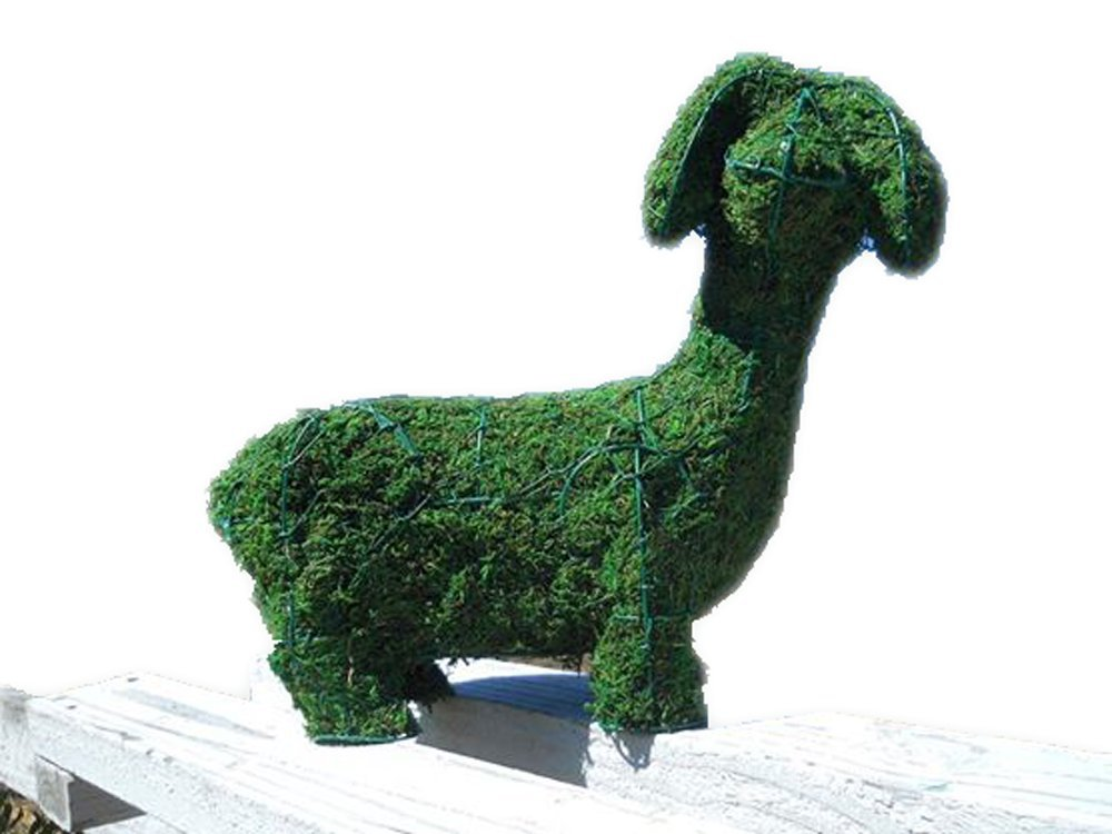 Dachshund 13 high inches x 17 long inches w/ Moss Topiary Frame , Handmade Animal Decoration