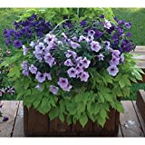 Hang A Garden Fence, Deck, Rail, and Wall Planter - 18 Inch Black Heavy Duty Flower Pots - 2 Pack (2)
