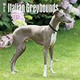 Italian Greyhounds 2018 12 x 12 Inch Monthly Square Wall Calendar, Animals Italian Dog Breeds (English, French and German Edition)