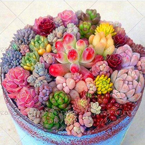 200pcs Rare Beauty Succulents Seeds Easy To Grow Potted Flower Seeds mix color