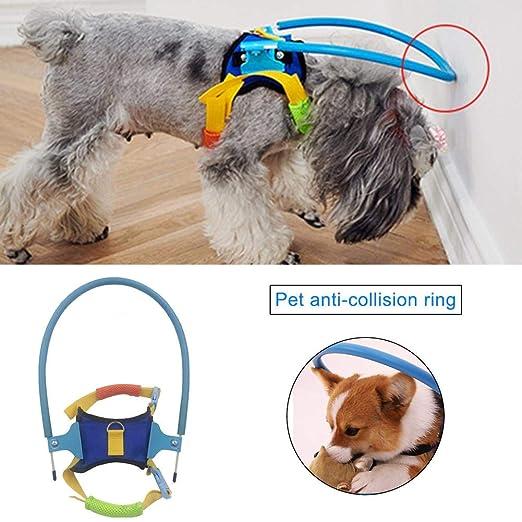 Augproveshak Collar para Mascotas, Perro: Amazon.es: Hogar