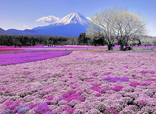 Adult Jigsaw Puzzle Colorful Flower Field Mount Fuji Japan ()