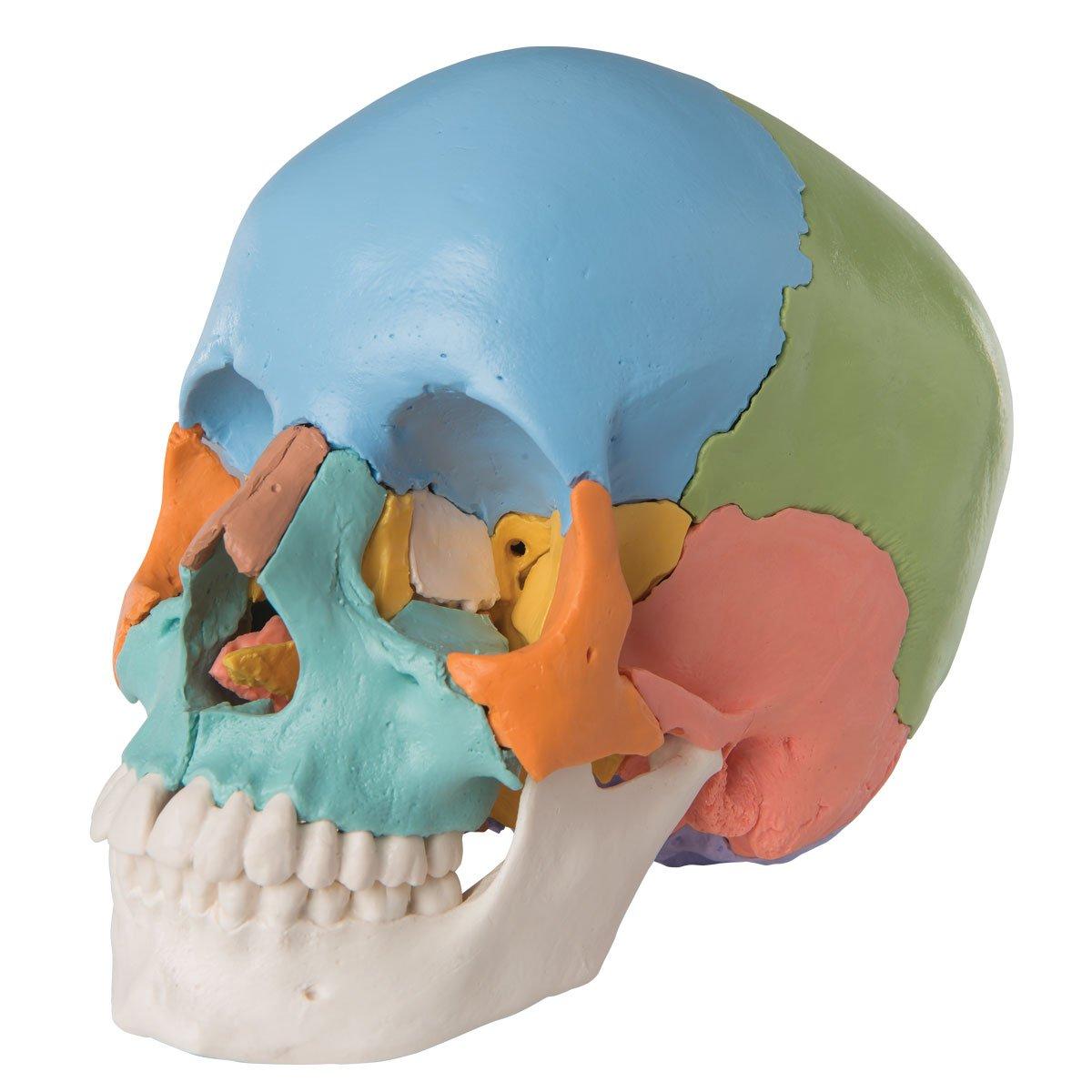 新しい到着 頭蓋骨22分解キット,マルチカラー仕様 B007ND1OAW B007ND1OAW, 庄和町:d3572957 --- a0267596.xsph.ru