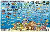 Roatan Honduras Dive Map & Reef Creatures Guide