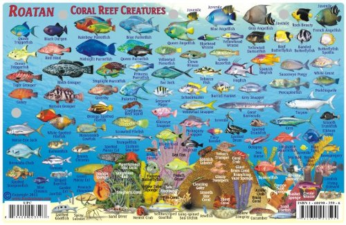Roatan Honduras Dive Map & Reef Creatures Guide Franko Maps Laminated Fish Card