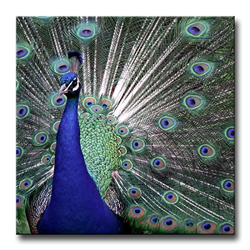 Peacock Butterfly Pictures (Wall Art Painting Colourful Peacock Spead The Tail Prints On Canvas The Picture Animal Pictures Oil For Home Modern Decoration Print Decor)