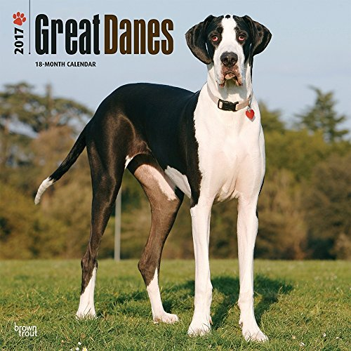 Great Danes (International Edition) 2017 Wall Calendar
