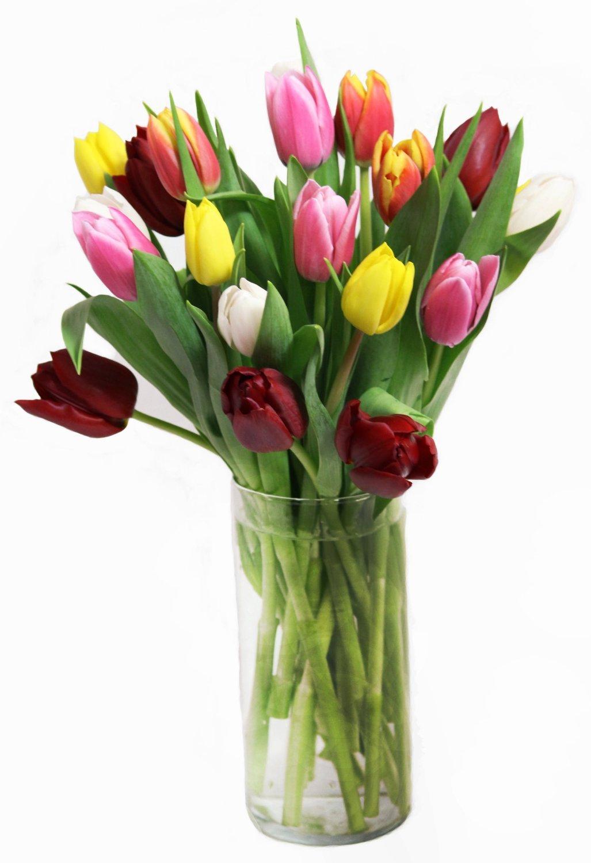 30 Stem Dare to Impress Fresh Cut Tulips by eflowerwholesale
