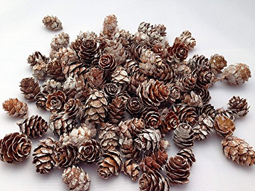 Treasured Memory 1.1lbs Natural Birch Pines Cones White Washed 500g Potpourri Christmas Kitchen Home Decoration All Year Roun