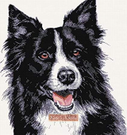 complete counted cross stitch kit BORDER COLLIE dog
