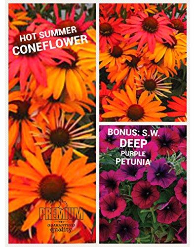 Hot Summer Coneflower Seeds  Echinacea  50 Seeds Upc 600188190281   Free Pack Sw Depp Purple Petunia