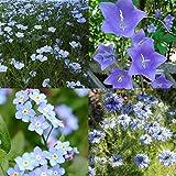 Mélange de fleurs bucolique bleu 2 grammes