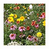 'BUTTERFLIES & BEES' WILDFLOWER SEED MIX - 19 Different Annuals & Perennials - High Quality, Beautiful Landscaping