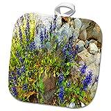 3dRose TDSwhite – Rock Photos - Purple Flowers Against Rocks - 8x8 Potholder (phl_281910_1)