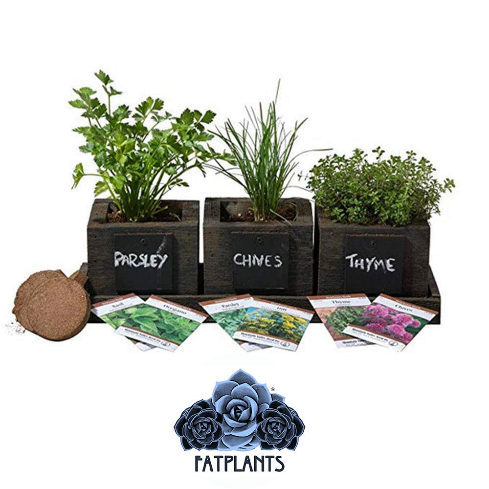 FATPLANTS Cedar Planter Box - Complete Herb Garden Indoor Kit - Herb Growing Kit - Grow Cooking Herbs Basil, Chives, Thyme, Oregano, Parsley & Cilantro (Wicker Brown) by FATPLANTS