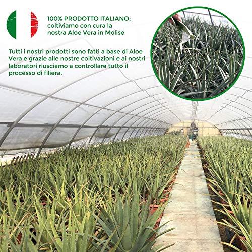 Succo di Aloe Vera e Melograno - 3L 4