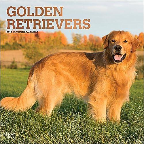 Golden Retrievers 2019 Square Wall Calendar