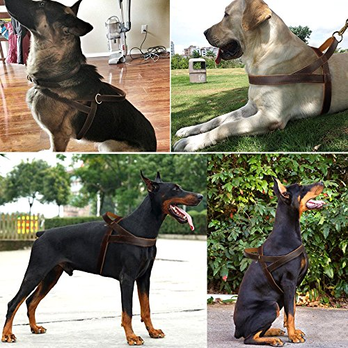 """Beirui 1"""" Width Genuine Leather Soft and Padded Dog Harness - Heavy Duty for Labrador German Shepherd durable service"""
