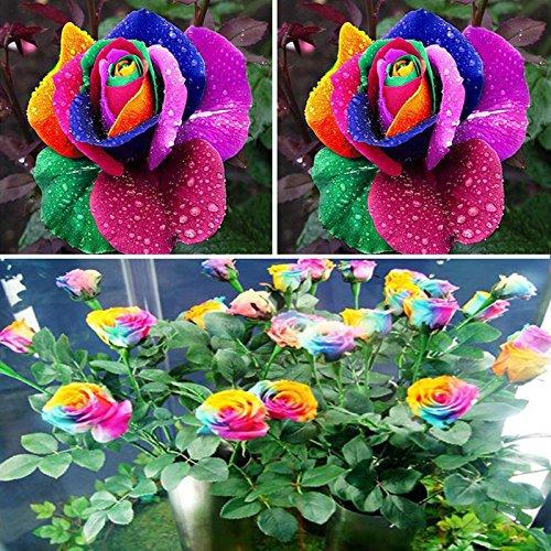 BigFamily 600pcs coloridas semillas de flores del arco iris plantas de jardín casero amante único multicolor
