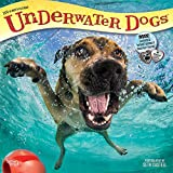Underwater Dogs 2019 12 x 12 Inch Monthly Square Wall Calendar, Pet Humor Puppy