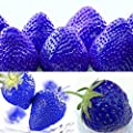 300pcs Blue Climbing Strawberry Seeds Tree Seed, Delicious Fruit Seeds For Home & Garden Bonsai Seeds Planting