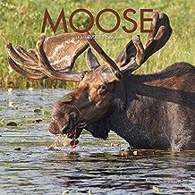 Moose 2019 Square Wall Calendar