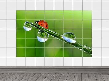 Piastrelle adesivo piastrelle immagine erba con gocce di rugiada e