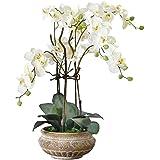 Kunstpflanze Orchidee weiß-creme mit Übertopf aus Keramik braun 58 cm hoch