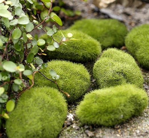 Molinter Mini Gartendeko Moos Piedra Planta muñeca Micro Paisaje Ornament de Resina para Puppenhaus Puppenhausmöbel Gartenmöbel Deko jardín 5pcs/Set: Amazon.es: Jardín