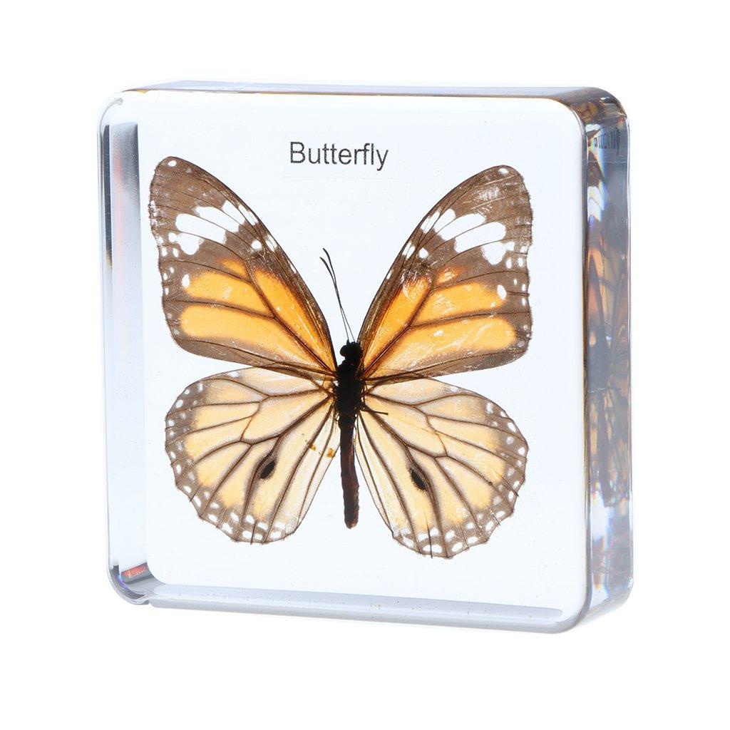 B Blesiya Juguete de Insectos Muestra de Bichos de Resina Modelo de Araña/Avispa/Escabarajo Regalo Creativo de Niños - Escarabajo Verde