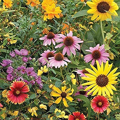 Wildflower Seeds Butterfly and Humming Bird Mix - Large 1 Ounce Packet 7,000+ Seeds - 23 Open Pollinated Annual and Perennial (Butterfly 7000)