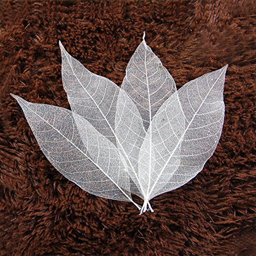 (50 pcs Natural Magnolia Leaf Bleed Leaves Samples for Card Scrapbook Embossing DIY Craft Gift)