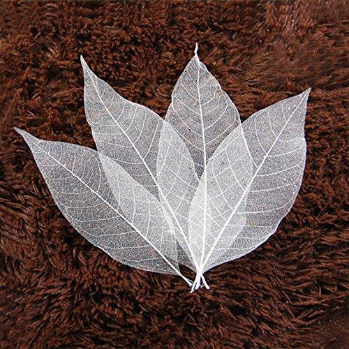(50 pcs Natural Magnolia Leaf Bleed Leaves Samples for Card Scrapbook Embossing DIY Craft Gift)