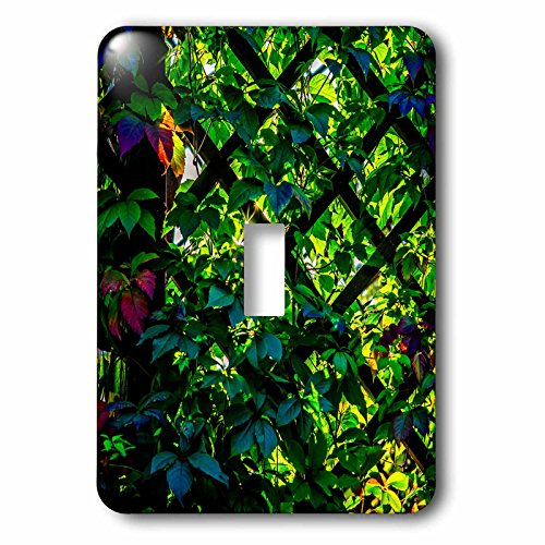 Set 1 Creeper (3dRose Alexis Photography - Autumn - Green Virginia creeper at sunset - Light Switch Covers - single toggle switch (lsp_264251_1))