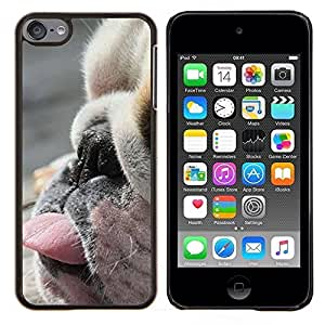 Planetar® ( Perro de Boston Terrier Raza Cute Puppy ) Apple iPod Touch 6 6th Touch6 Fundas Cover Cubre Hard Case Cover