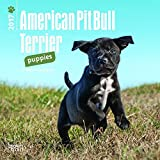 American Pit Bull Terrier Puppies 2017 Mini 7x7 (Multilingual Edition)
