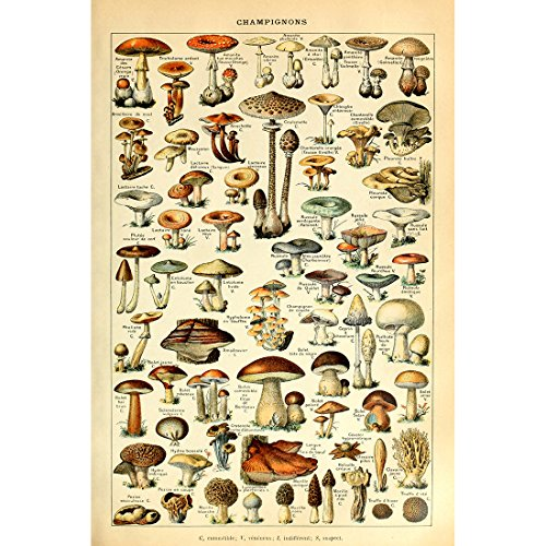 - Meishe Art Vintage Poster Print Mushrooms Champignons Identification Reference Chart Diagram Illustration Botanical Educational Wall Decor
